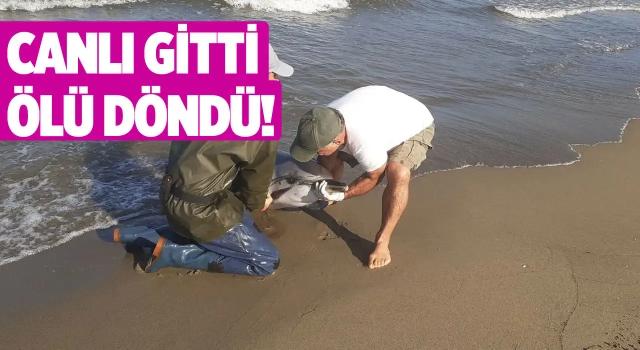 Pamucak'ta Kurtarılan Yunus Can Verdi!