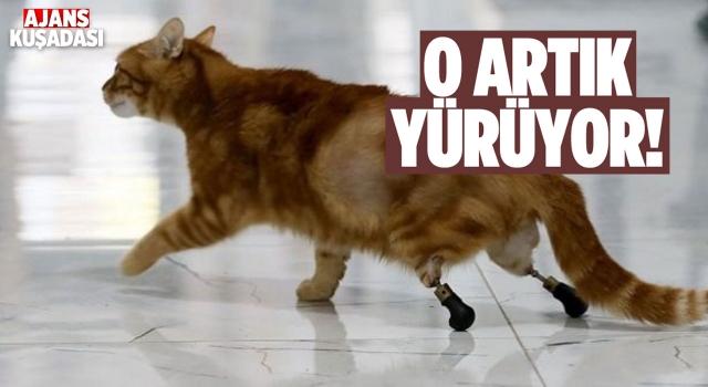 Pika Adlı Kedi İçin Özel Ayakkabı Tasarlandı