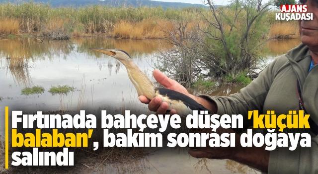 Fırtınaya Yakalanan Balaban Kuşu Doğaya Salındı