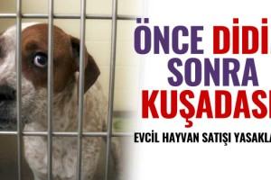 Kuşadası'nda Evcil Hayvan Satışı Yasaklandı!