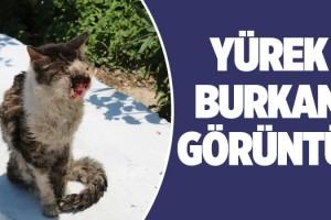 Yüz Kanseri Olan Kedi Yaşama Tutunmaya Çalışıyor!